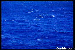 external image blueocean.jpg
